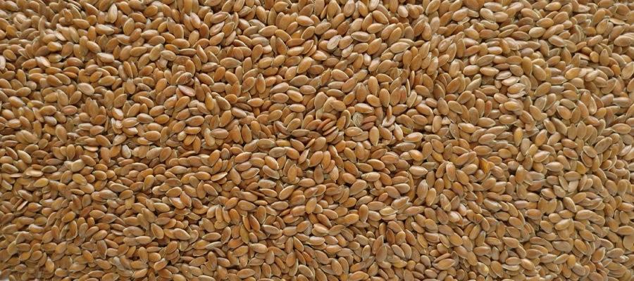 Alsi-Seeds-exporter-india