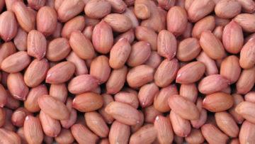 Groundnut-exporter-india